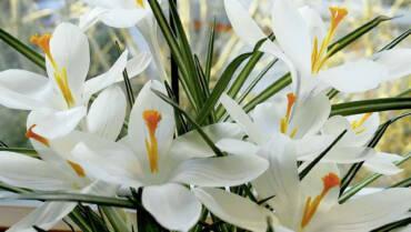 Möge der neue Tag dir den Blick für die Schönheit der Welt schärfen.